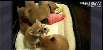 puppy cam blog