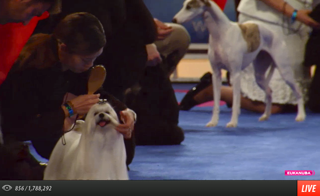 AKC Eukanuba on Ustream