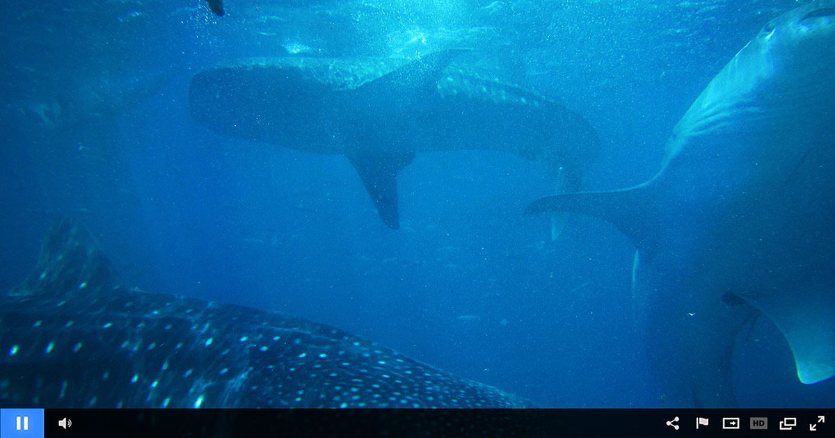 Discovery Channel Broadcasts Shark Week Live on Ustream for Fourth Year